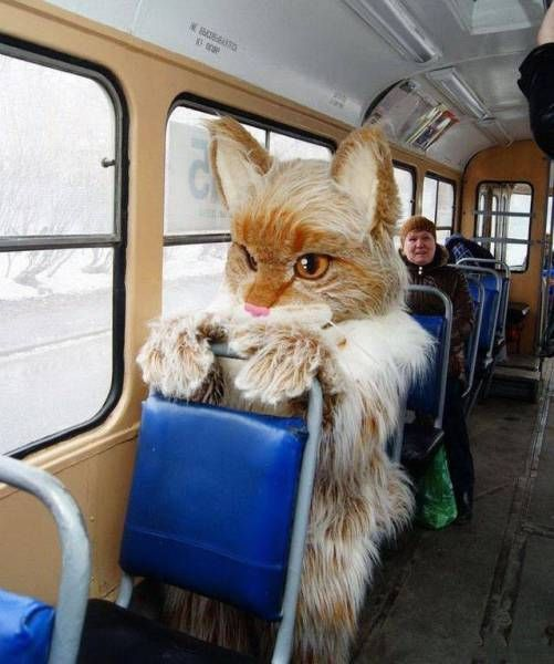 Funny Photos From Russia