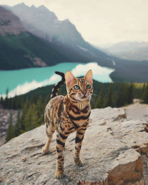 A Cat From Canada That Travels A Lot