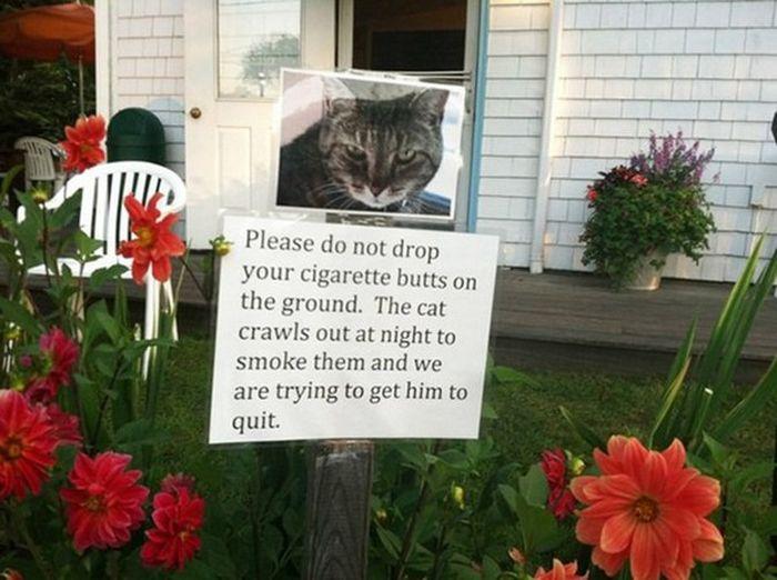 Hilarious Yard Signs