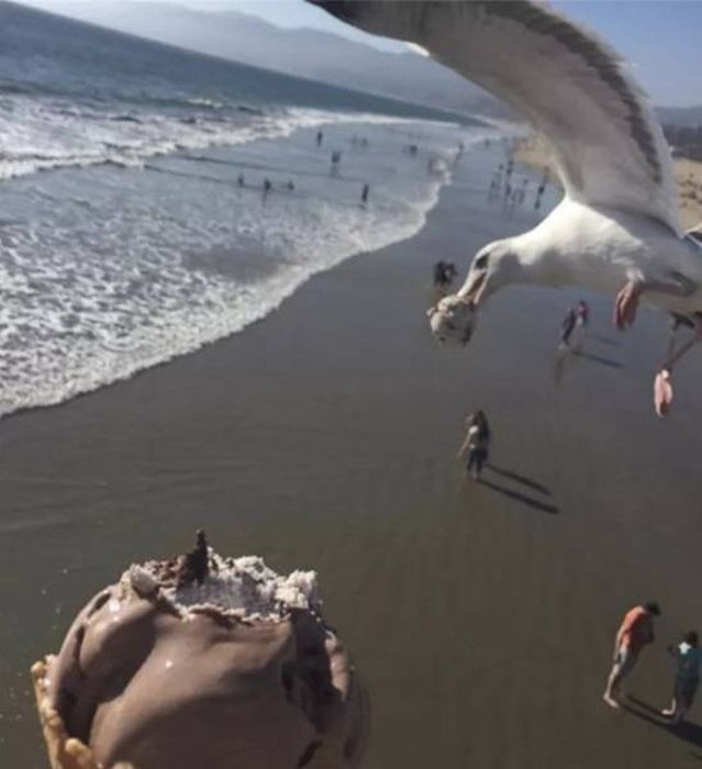Photos With Great Timing