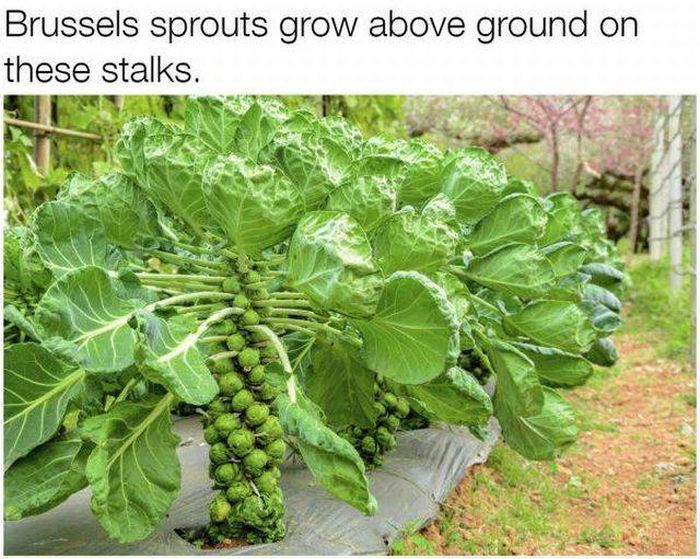 These Foods Actually Grow In Some Unexpected Ways