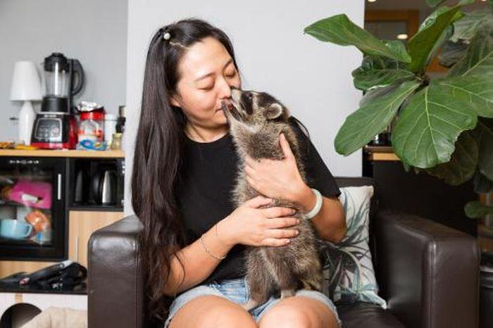 Chinese Pets