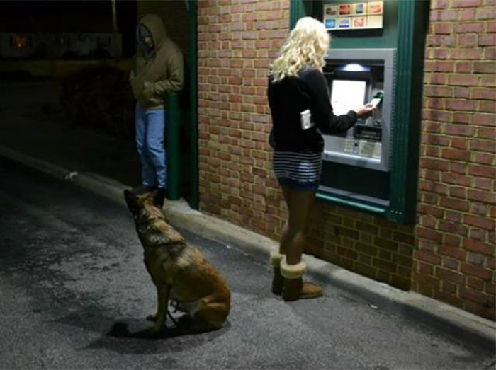 When Afraid To Withdraw Money From An ATM – Take Your Dog With You