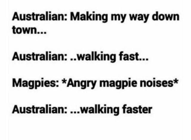 Australia Memes