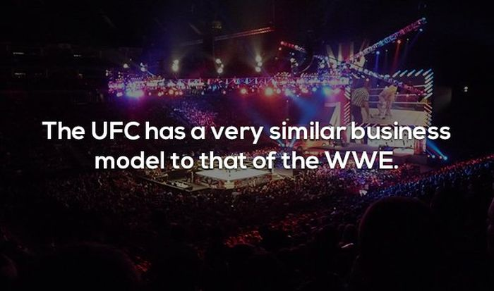 Interesting Facts About MMA and the UFC