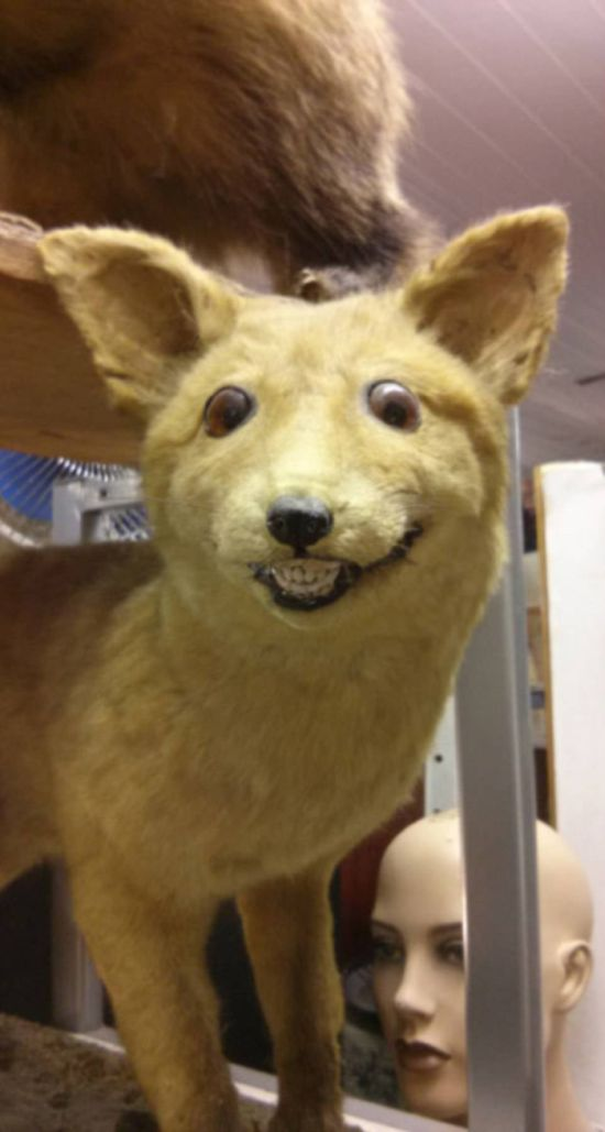 Taxidermy Fails