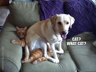 Proof That Dogs Are As Evil As Cats