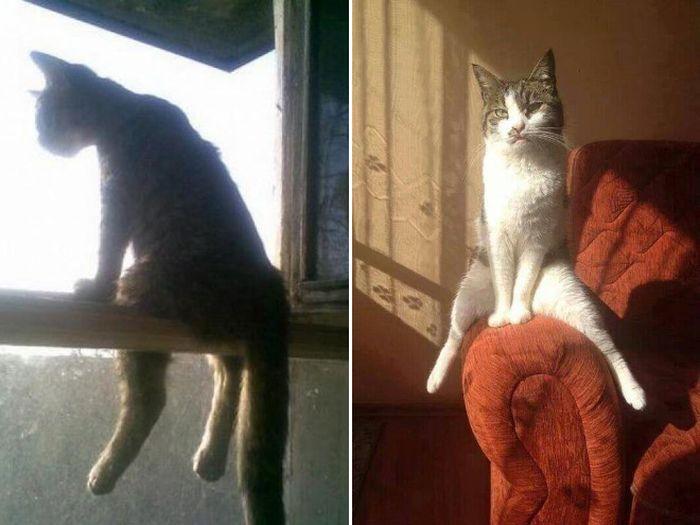 Cats Sitting