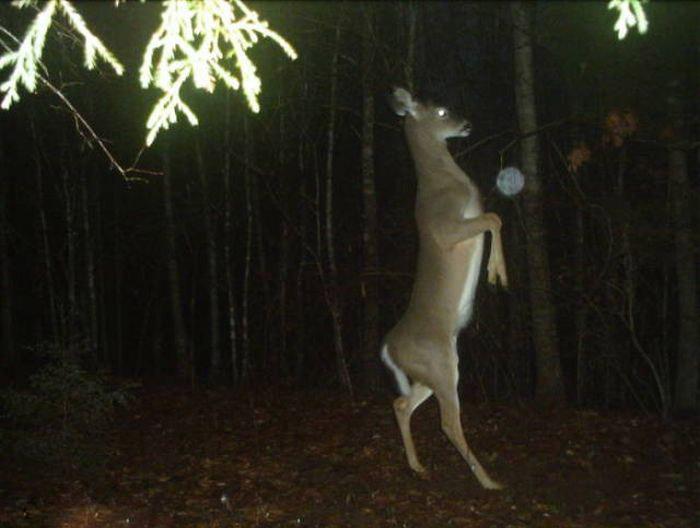Animals Captured By Hidden Cams