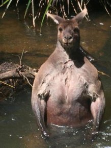 Animals That Know How To Pose