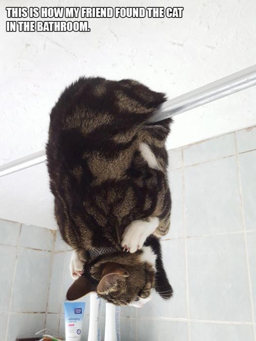 Cats Acting Weird