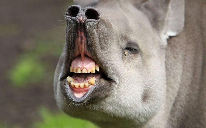 Funny Animals, part 16