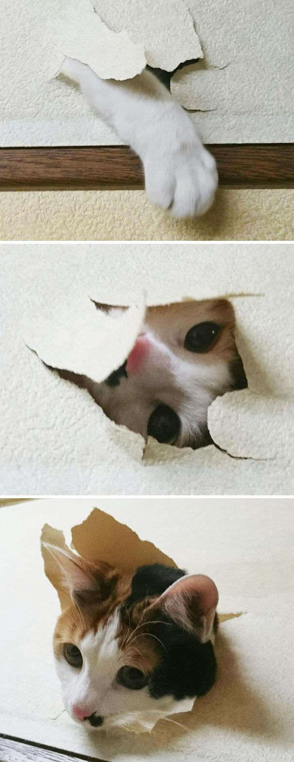 Bad Pets