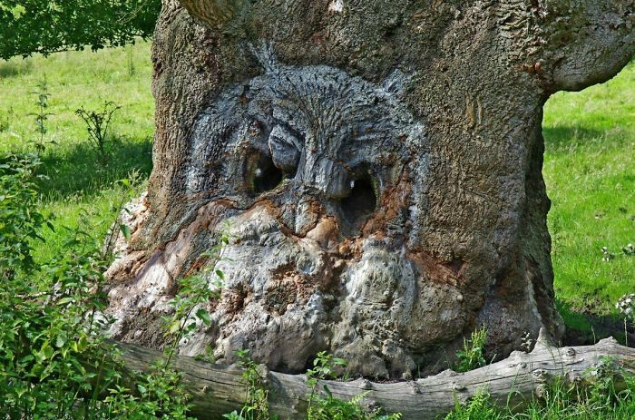TheseTrees Will Make You Look Twice Others - 21 unbelievable photos that will make you look twice