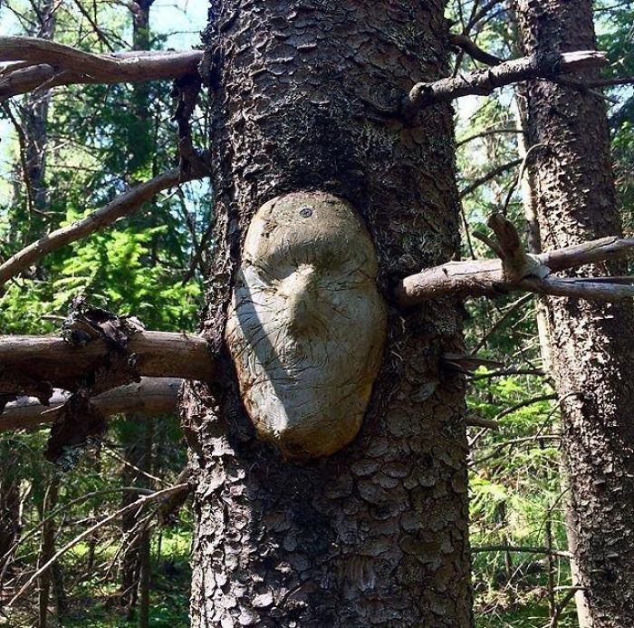 TheseTrees Will Make You Look Twice