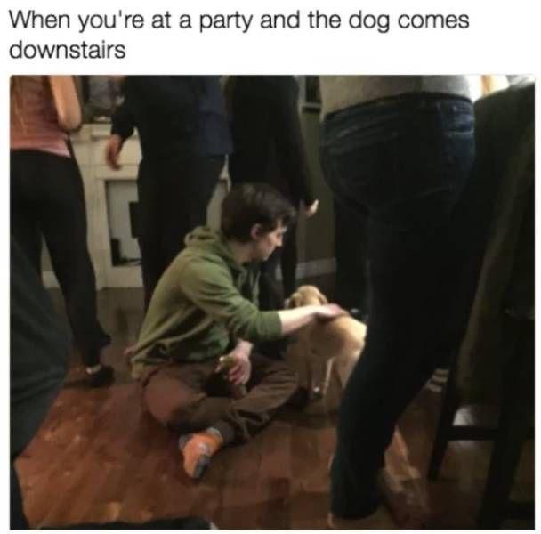 Dog Memes