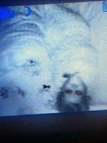 Creepy Stuff On Baby  Monitors