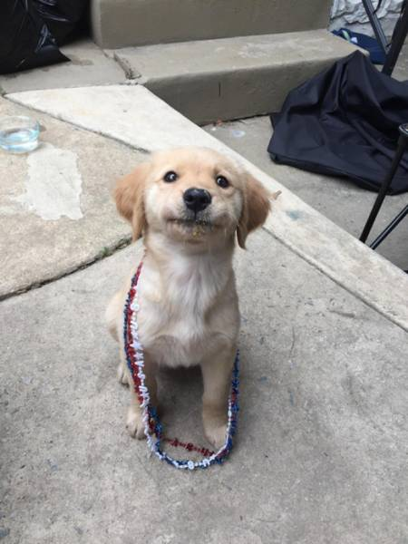 Happiness Has So Many Faces
