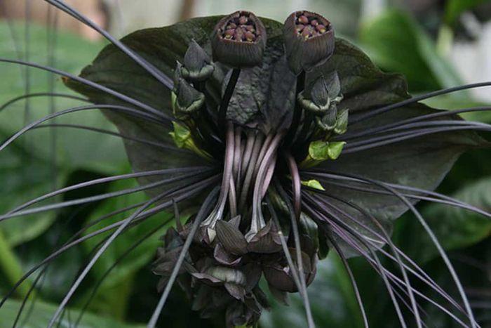 Creepy Plants