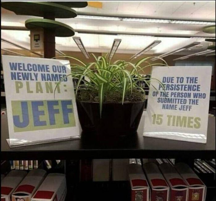Office Pranks VS. Office Memes