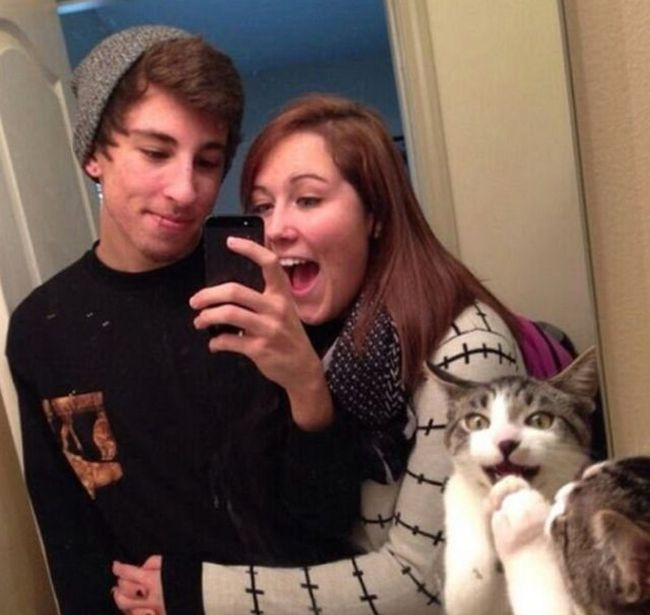 Cats Photobomb Photos
