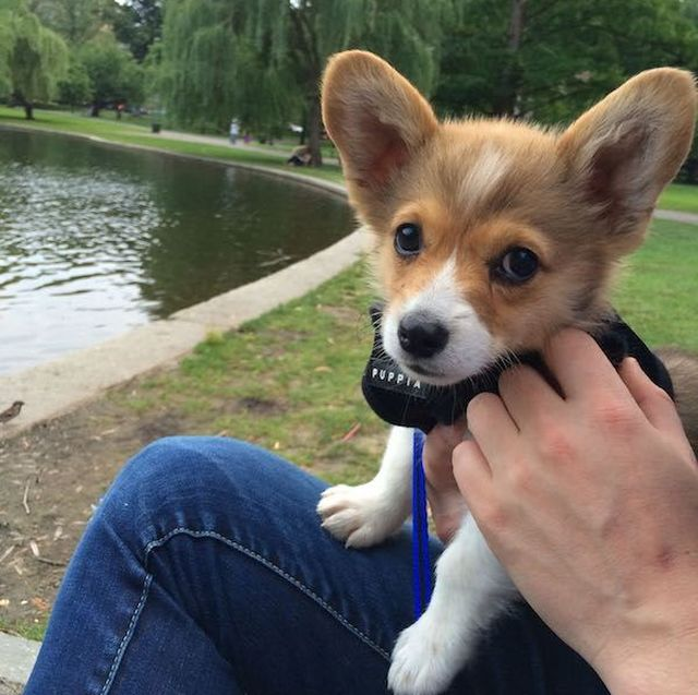 The Most Popular Dog Names In America