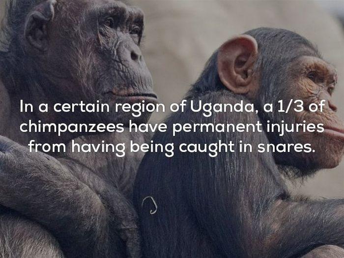 Creepy Facts, part 3