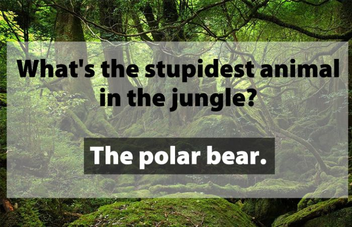 Jokes That Are So Dumb, They're Actually Funny