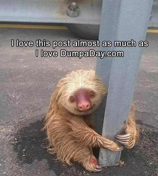Funny Animals With Caption