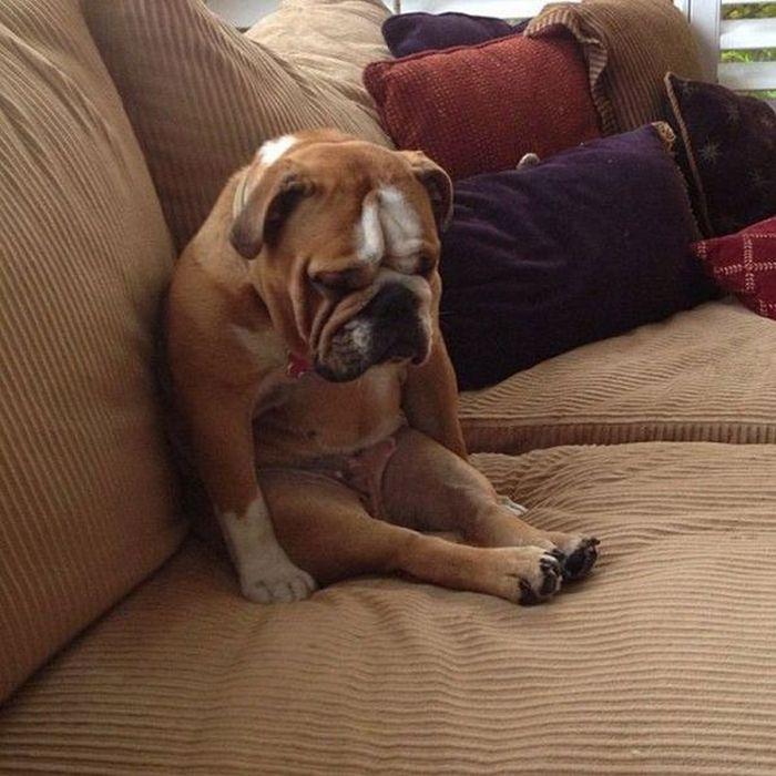 Broken Dogs
