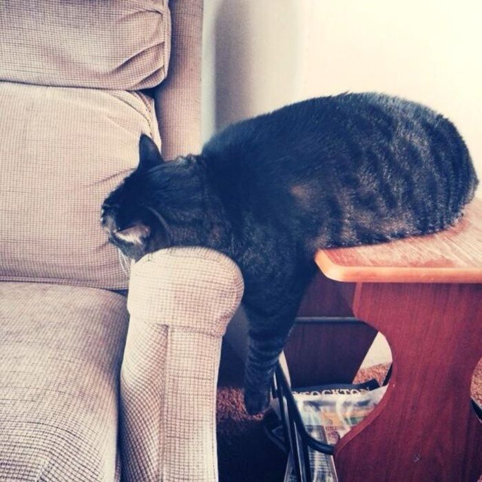 Lazy Cats