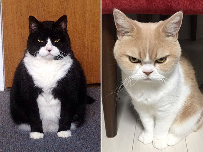 Cats Judging You