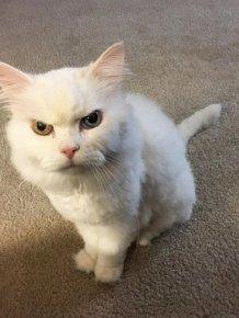 Cats Judging You