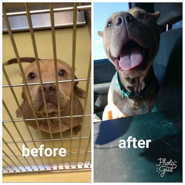 Before And After Animal Adoption
