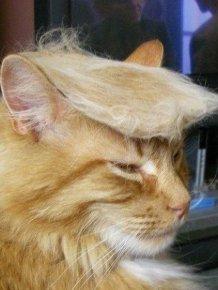 Donald Trump Cats
