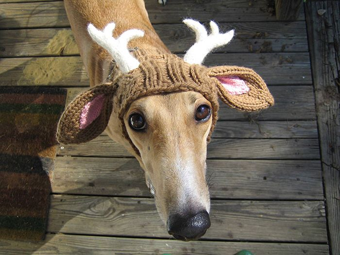 f740af1edd25d Hilarious Winter Hats For You and Your Pets