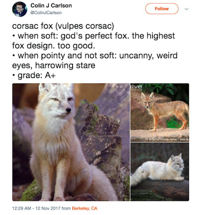 Guy Rating Foxes On Twitter
