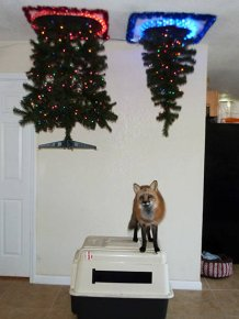 How To Save Your Christmas From Your Own Pets