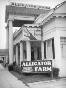 Vintage Photos Of Los Angeles Alligator Farm