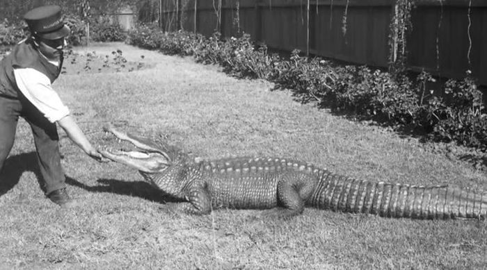 Vintage Photos Of Los Angeles Alligator Farm
