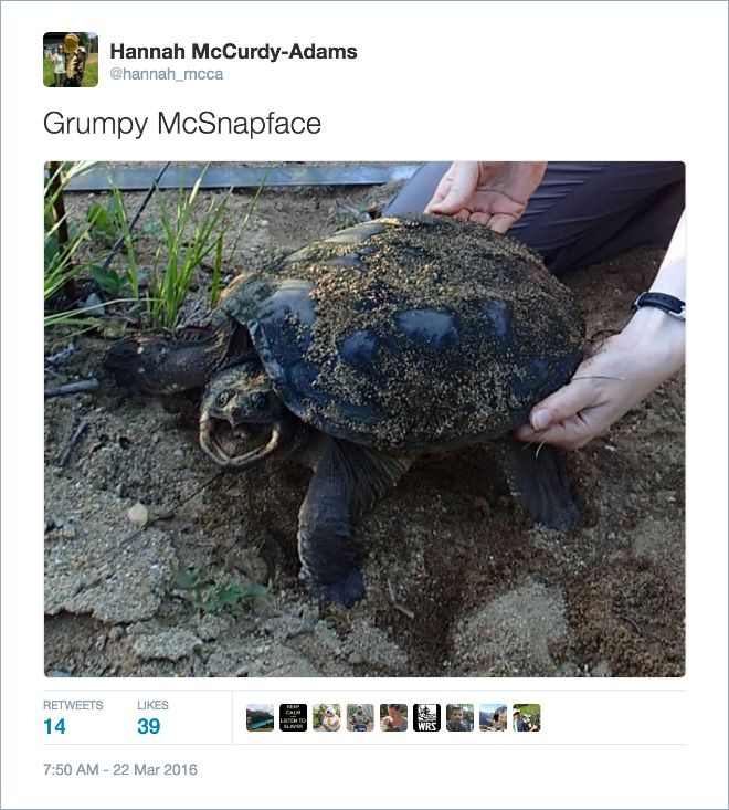 Twitter Users Create Better Names For Animals