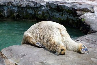 Animals With Hangover
