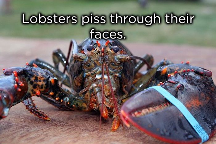 Weird Animal Facts