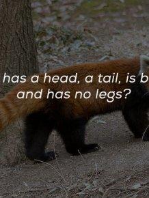 Nice Riddles