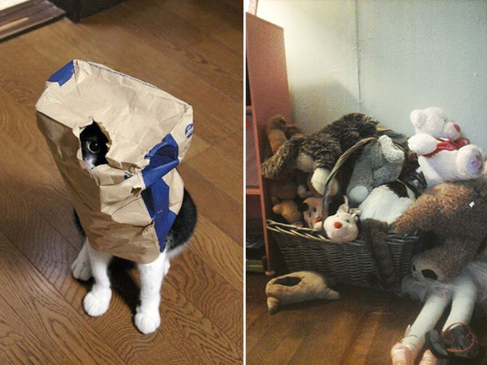 Camouflaged Cats That Win at Hide and Seek