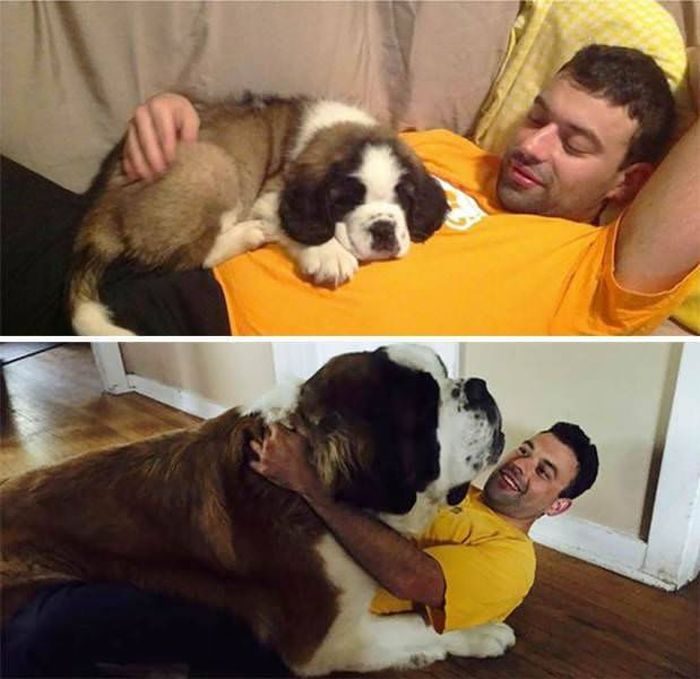 From Puppy To A Doggy