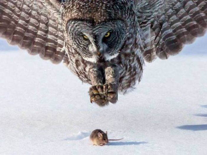 Perfectly Timed Photos, part 2