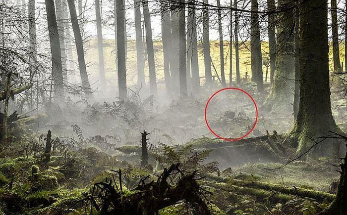 British Army Show Off Their Camouflage Skills