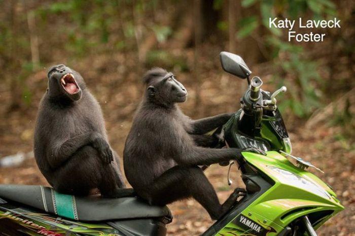 Comedy Wildlife Photo Awards Winners
