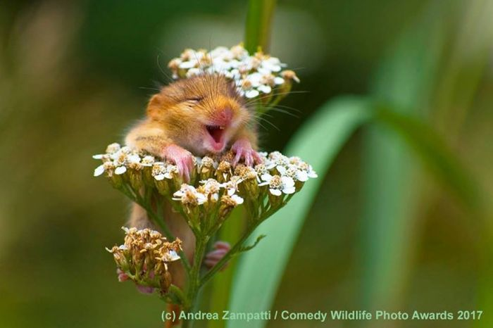 Comedy Wildlife Photo Awards Winners